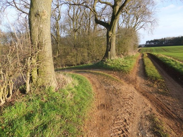 wolds_54_960