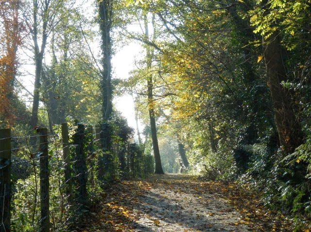 Autumn, reviews 044