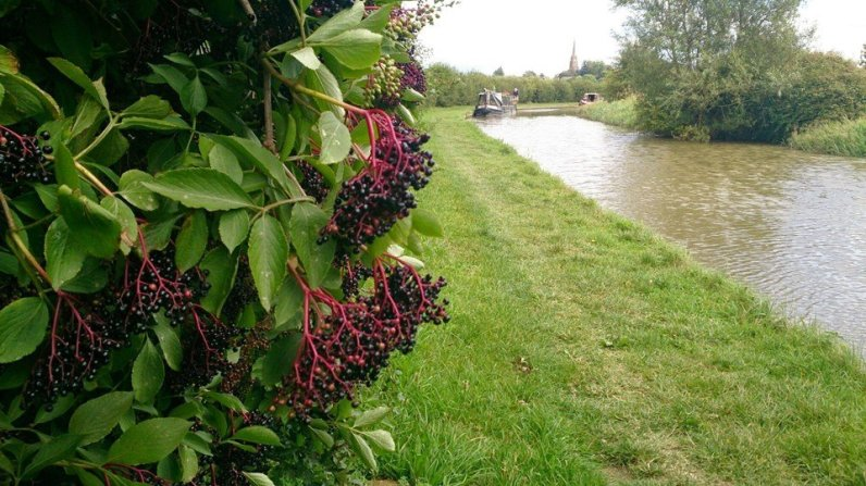 Oxford_Canal_023