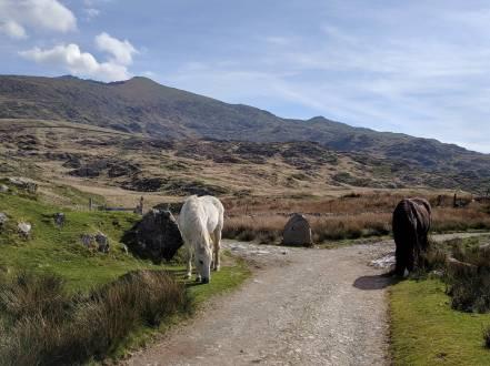 The Rhyd Ddu Path up Snowdon