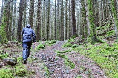 Gwydr_Forest_005