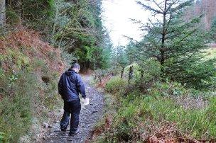 Gwydr_Forest_017