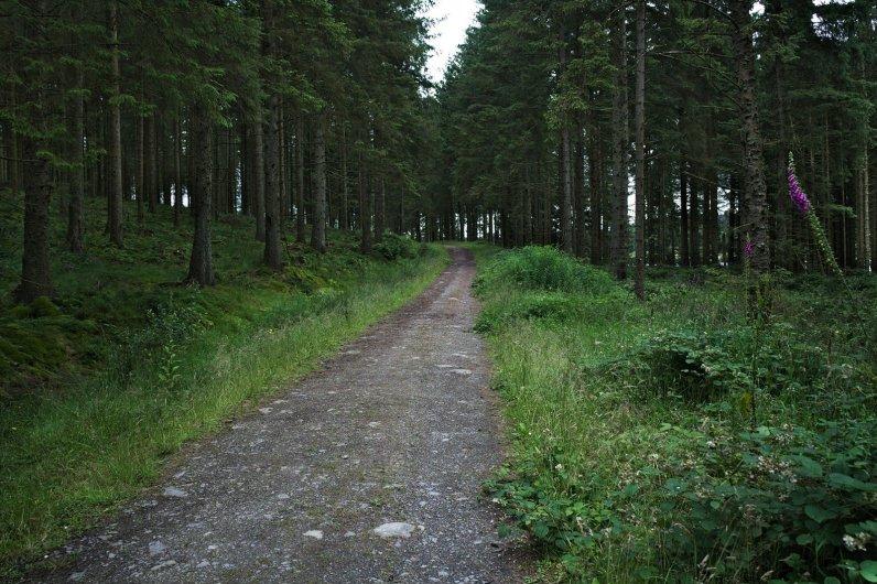 Walk or Mountain BIke around the Alwen Reservoir Trail