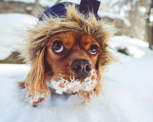 5 tips for surviving winter walkies