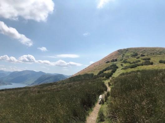 Walk up Low Fell and Fellbarrow