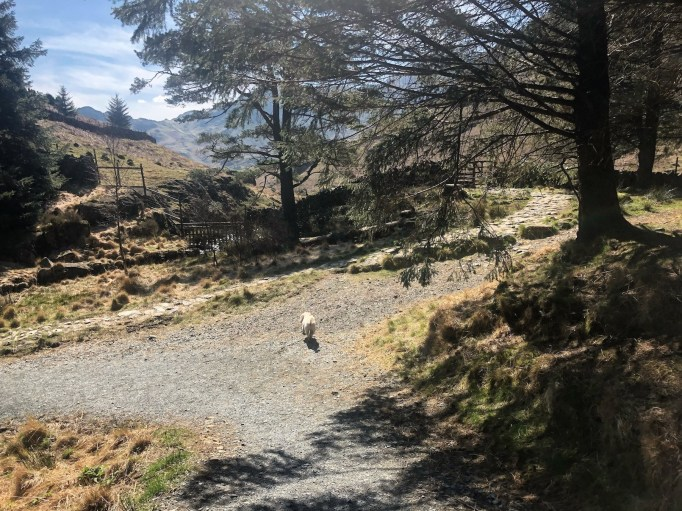 Langdale_easy_walk_11a