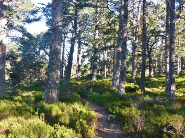 Braeriach Circular Walk from Whitewell