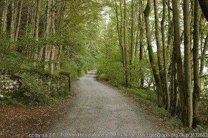 Windermere West Shore Lakeside Walk