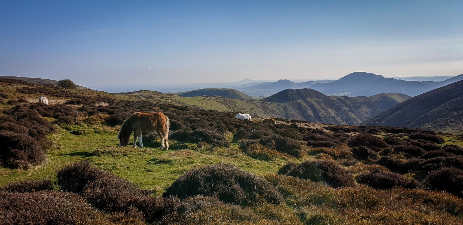 Walk up Long Mynd from Church Stretton