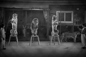 Katzen mit gebrochenem Willen - Foto Britta Jaschinski