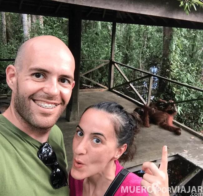 Por todo el recorrido puedes encontrarte con orangutanes, pero no hay que asustarse ni entrometerse, solo ser parte del paisaje
