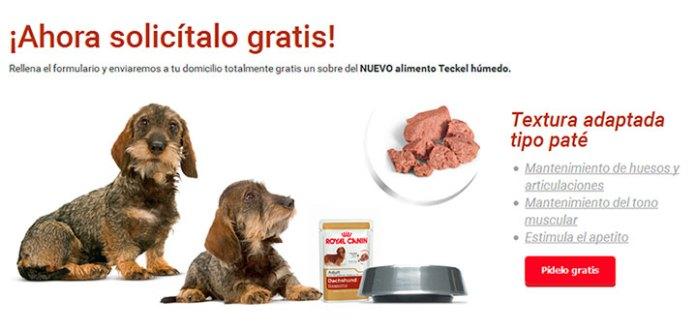 Prueba gratis alimento Teckel de Royal Canin