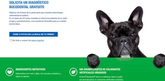 Consigue un diagnóstico bucodental gratuito con Purina
