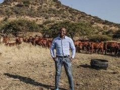 livestock wealth