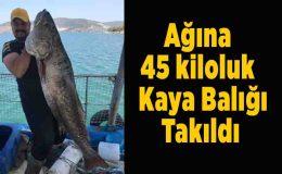 Balıkçının ağına 45 kiloluk Kaya balığı takıldı
