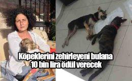 Köpeklerini zehirleyeni bulana 10 bin lira ödül verecek