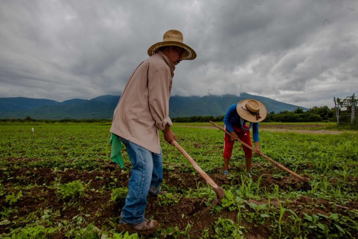 Fotografía: Twitter @Agricultura_mex