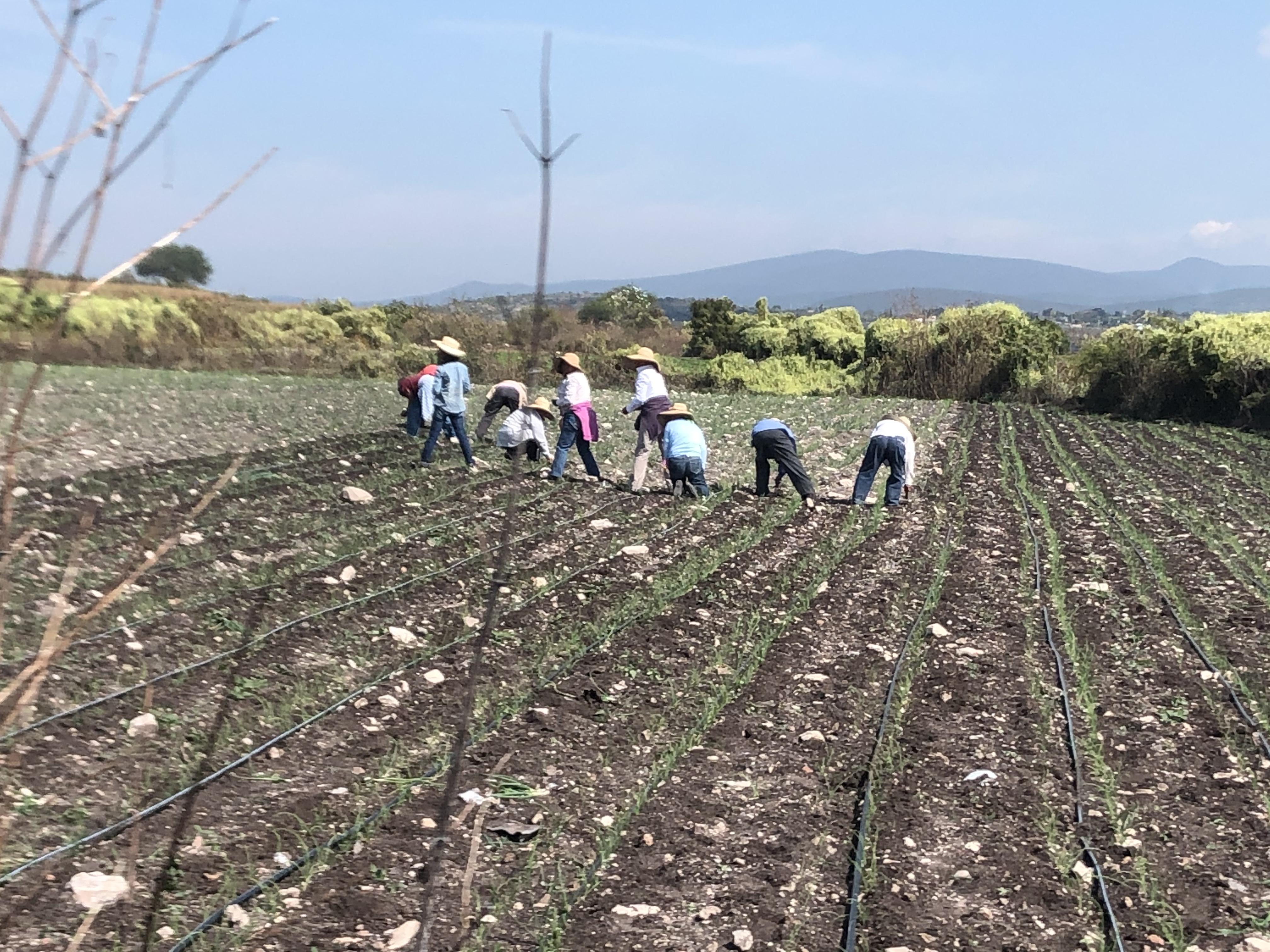 Demandan campesinos impulsar la compra directa de sus productos