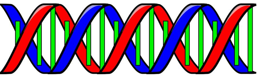 DNA Organizacional
