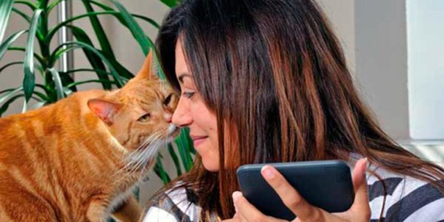 viver_gatos_2