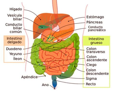 Cáncer de colon y metástasis