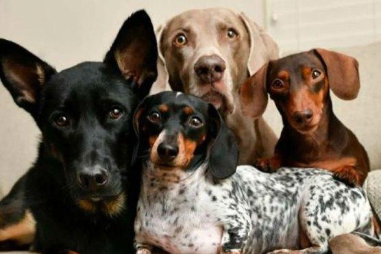 انسٹاگرام سے لاکھوں ڈالر کمانے والے کتے