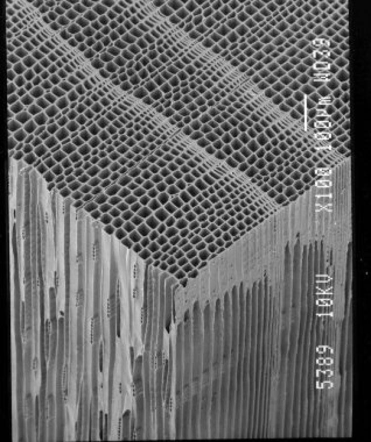 ヒノキ電子顕微鏡
