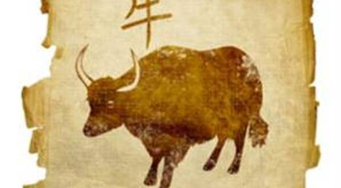 Horóscopo Chinês - Signo de Boi