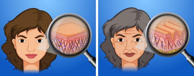 o que causa perda do colageno na pele