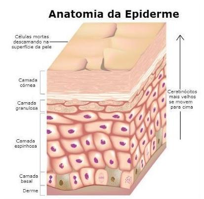 peeling quimico - esquema da pele