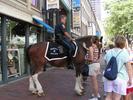 policeman on horse