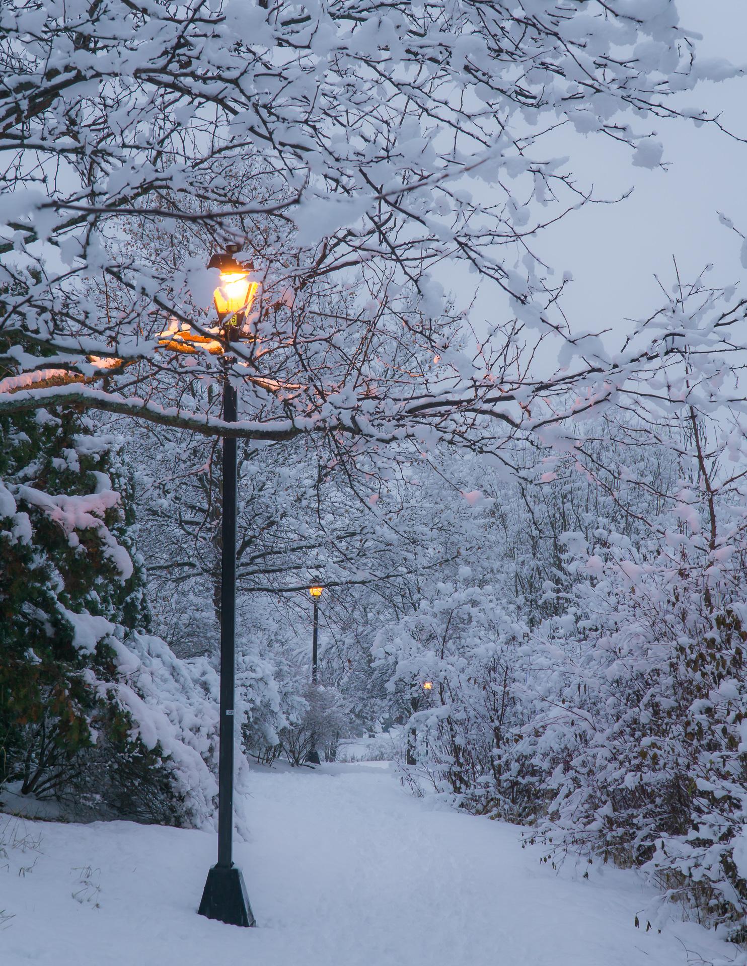 Quiet Winter Lights