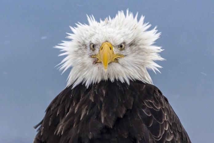 Olhar da Águia