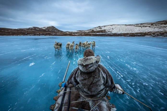 Trenós puxados por cães na Groenlândia