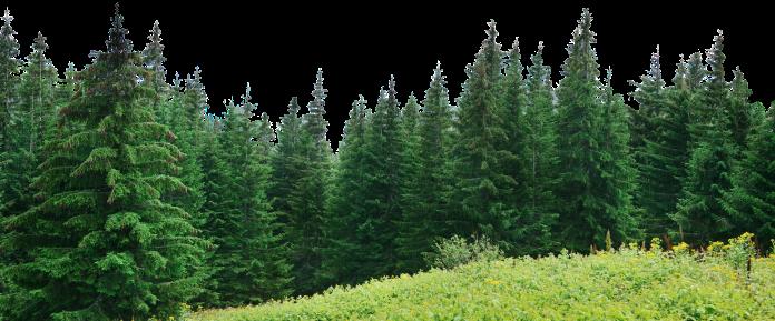Árvores PNG