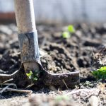Why Caregivers Should Garden and How To Find The Time