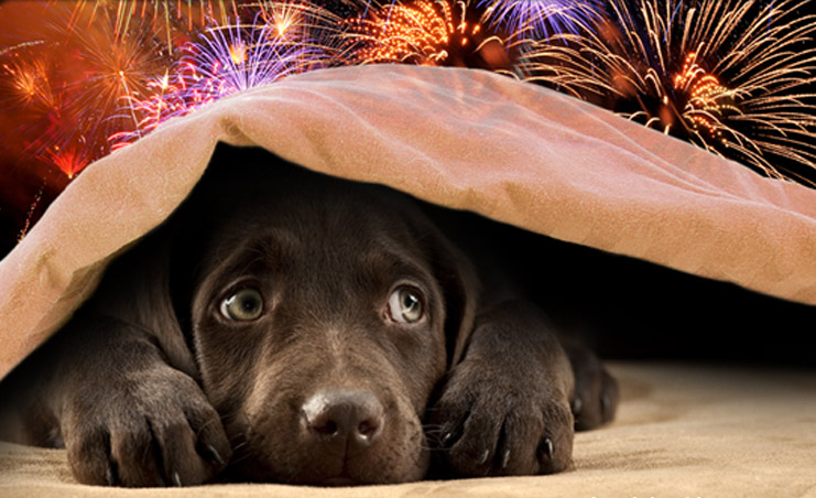What To Give Dogs To Calm Down During Fireworks