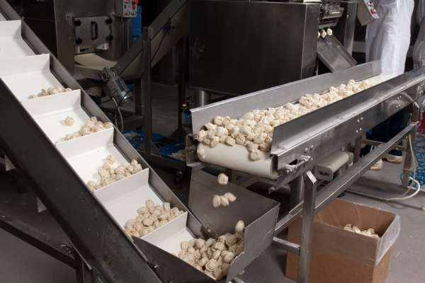 Picture of a ravioli production line creating and sorting individual ravioli pieces