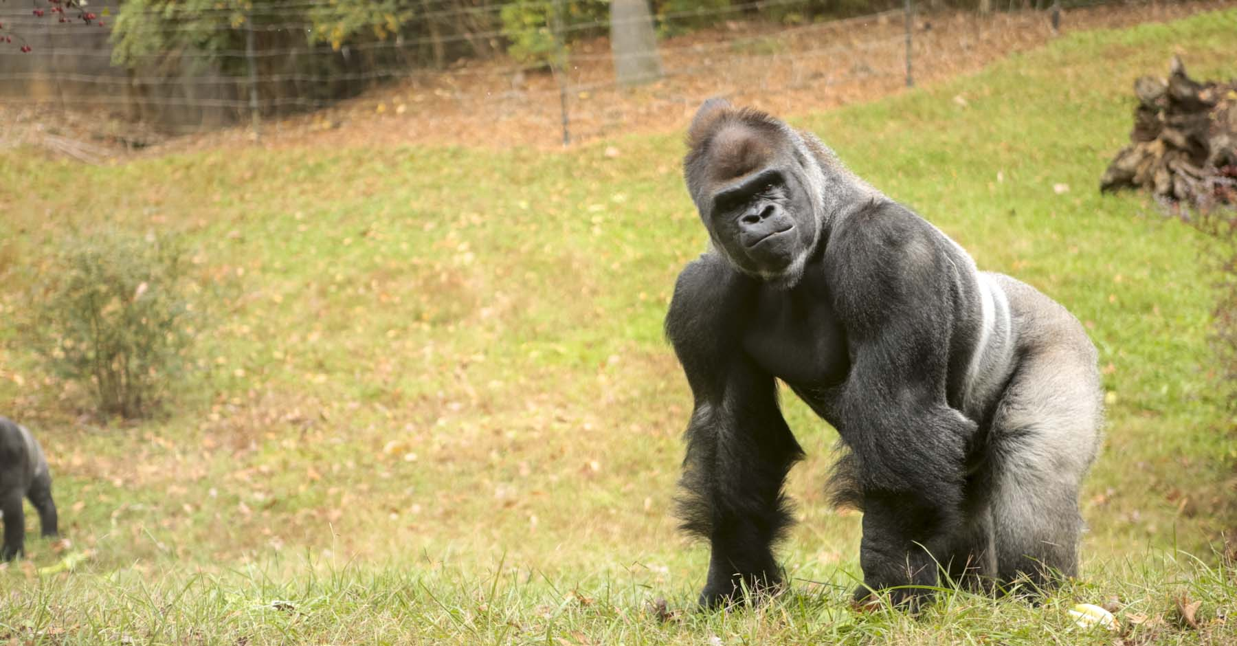 zoo knoxville launches wildly