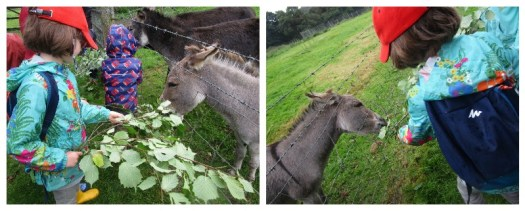 H feeding donkeys at Coombe Mill, Christmas at Coombe Mill