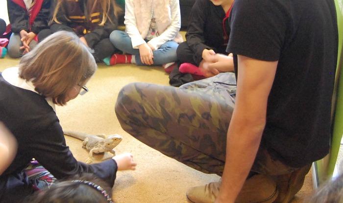 H feeding Derek the Bearded Dragon with Wild Fangs