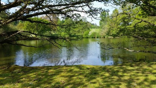 Loseley Park lake