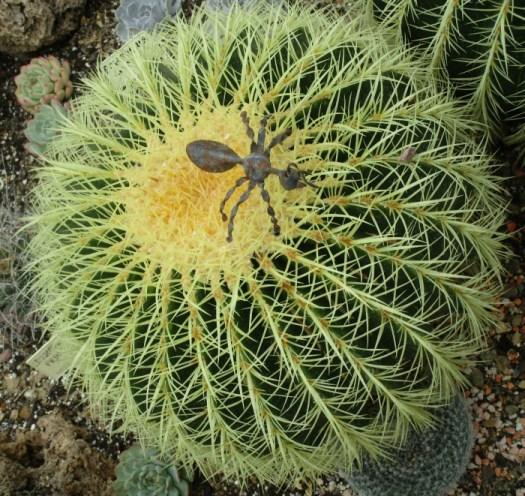 Lullingstone Castle World Garden cacti 2