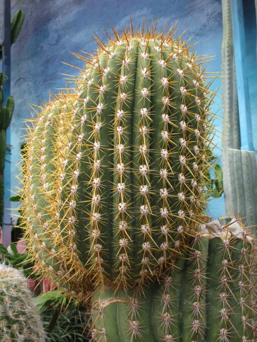 Lullingstone Castle World Garden cacti