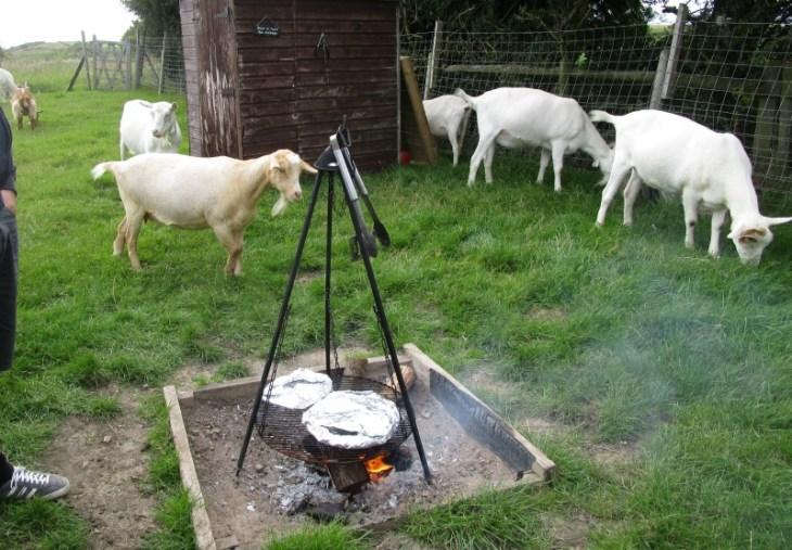 pizza and goats at Woodspring Farm Hut