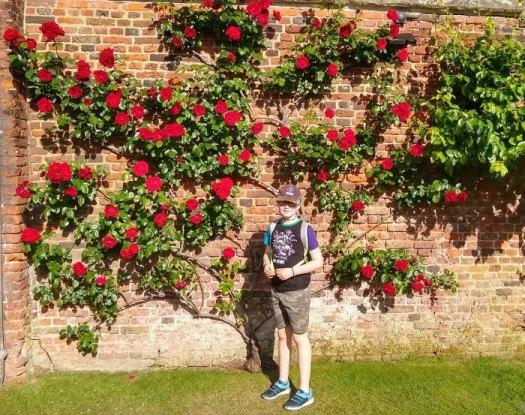 Moto G6 Hampton Court roses