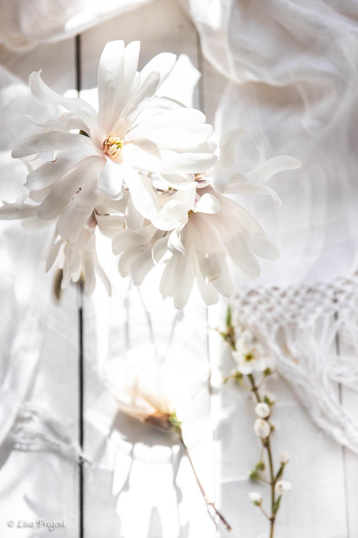 fiori-bianchi-total-white photography