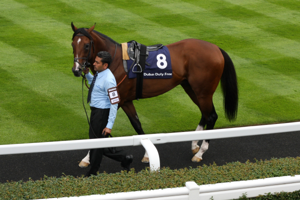 Ascot Shergar Cup 2013 horse walked around parade ring