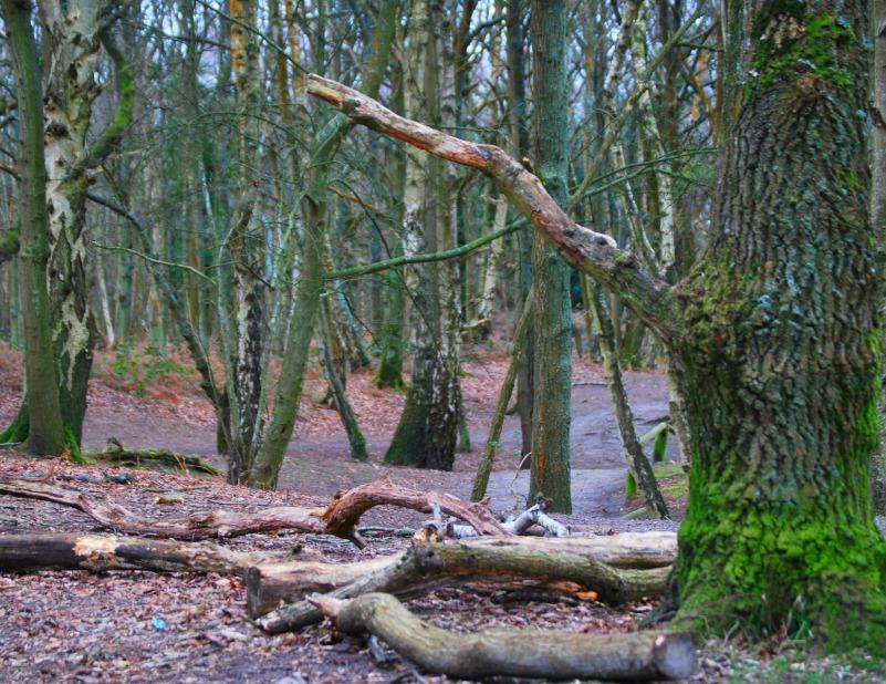 Trees at Fleet Pond
