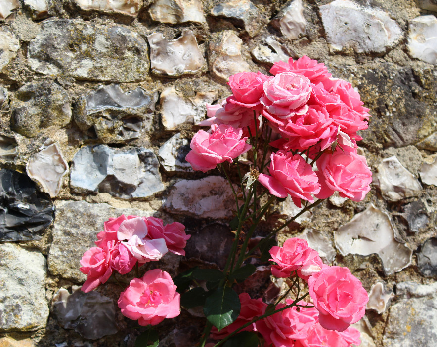 The Rose Garden at Chawton House Library